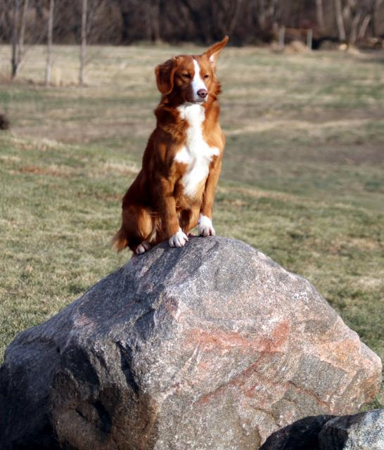 toller sit rock