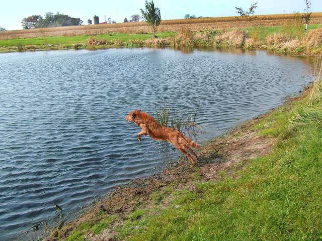 toller jump lake