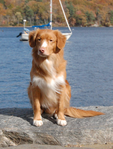 toller sit sailboat