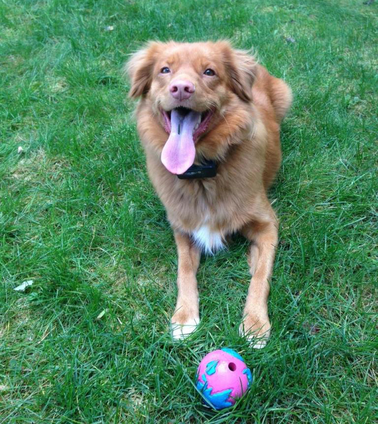 toller ball happy
