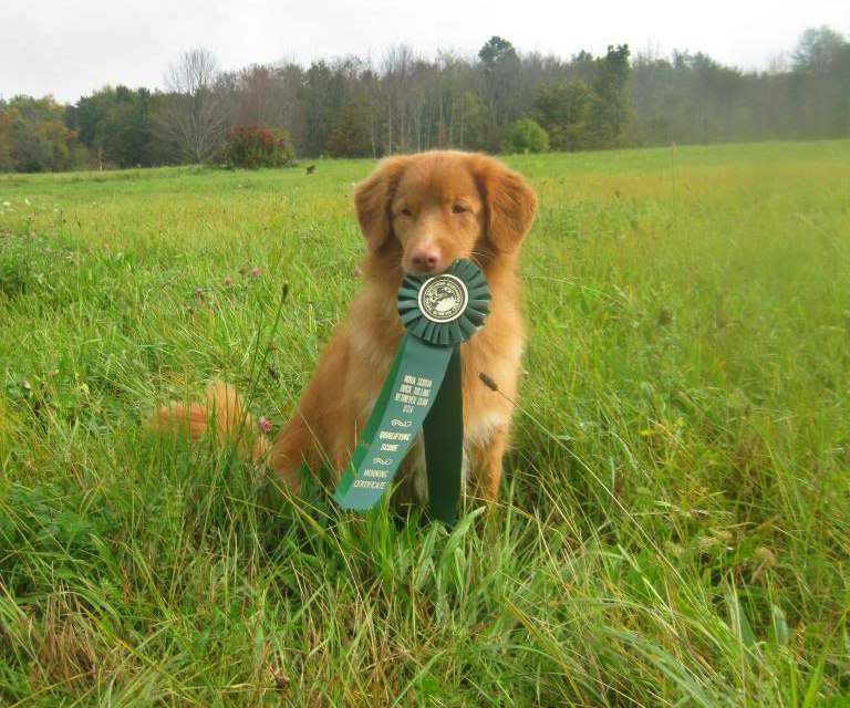 toller field working certificate ribbon