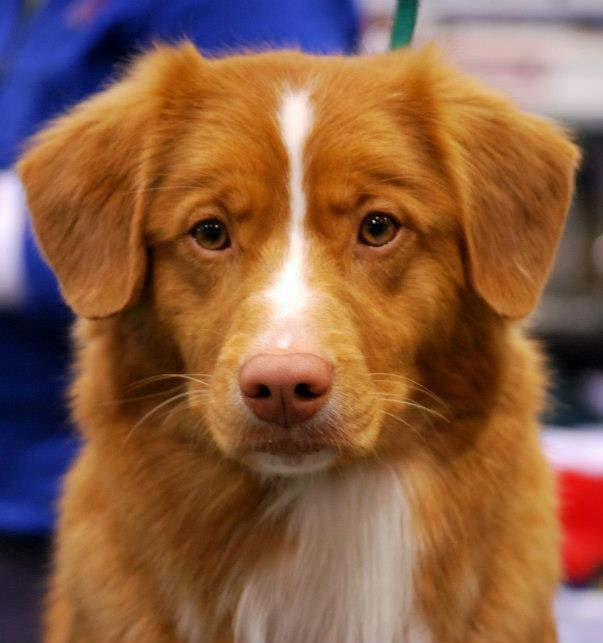 toller face adorable