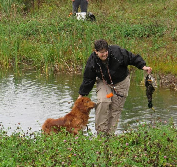 toller field retrieve duck