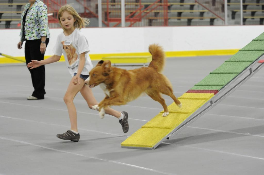 toller agility child handler teeter