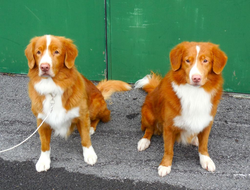 tollers father and son
