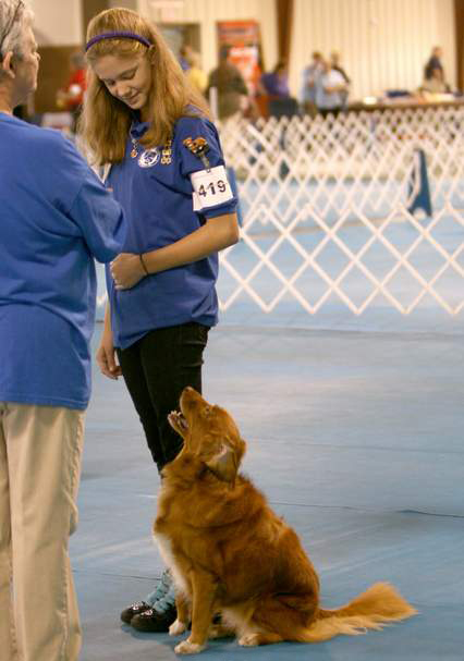 toller competing in obedience