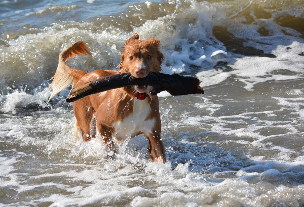 toller ocean log retrieve