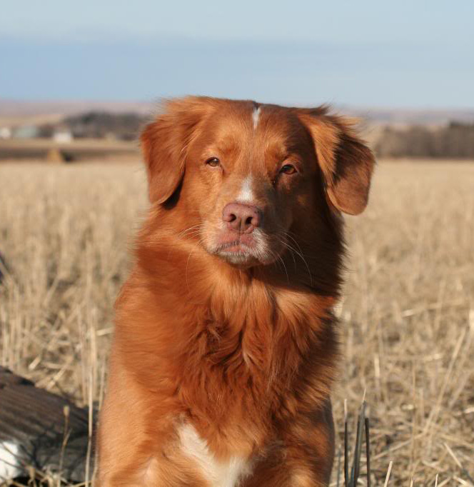 toller portrait ethical