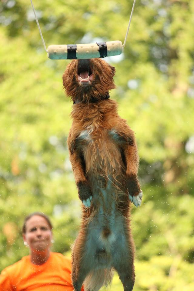 toller dock dog big air