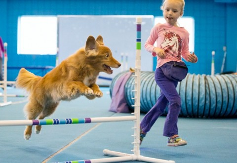 toller agility