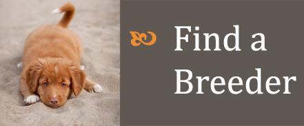 find a breeder