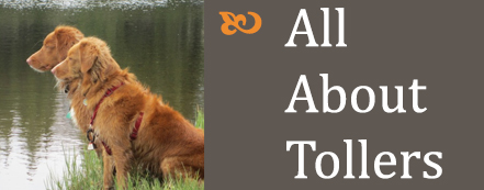 all about tollers