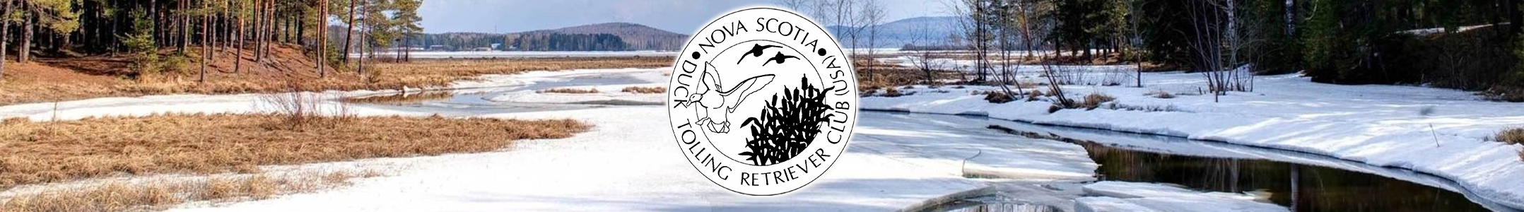 Nova Scotia Duck Tolling Retriever Club (USA)